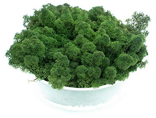 DauerFloristik Islandmoos Moos-Grün 250g konserviert moosgrün waldgrün