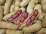 Rojo de Tennessee Valencia de la herencia de maní Semillas 10-15 cacahuetes ~ polinización abierta