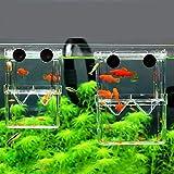 Multifuncional de doble capa transparente Fish Breeding isotérmico acuario de cría caja adecuada for su acuario Familia Fish Fry Cría de Protección de pescado 8 * 7 * 11cm ( Color : Transparent )