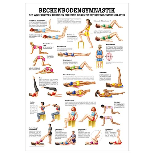 Beckenbodengymnastik Lehrtafel Anatomie 100x70 cm medizinische Lehrmittel