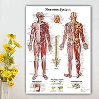 人間の神経系チャートポスターマップキャンバス絵画、医学教育のための壁の写真医師オフィス教室家の装飾70x90cmフレームなし