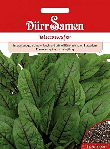 Dürr Samen 4159 Blutampfer (Blutampfersamen)