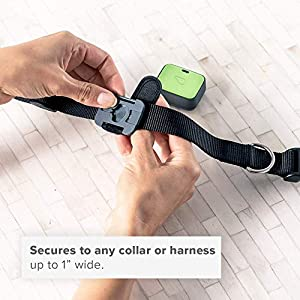 Whistle Go Explore/The Ultimate Health + Location Tracker for Pets/Green