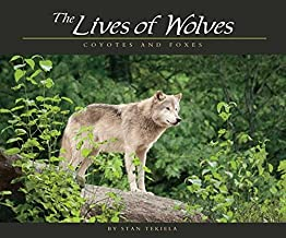 Lives of Wolves, Coyotes and Foxes