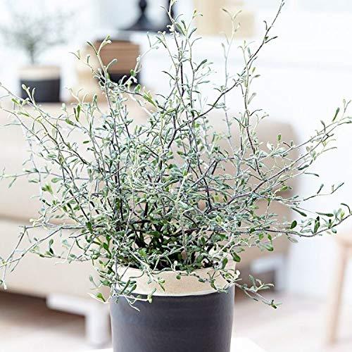 Qulista Samenhaus - Rarität 10pcs Zickzackstrauch Grünpflanzen Kübelpflanze Zimmerpflanzen Blumensamen winterhart mehrjärhig