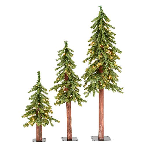 Vickerman Natural Alpine Tree Set lit by 185 Clear lights, with three trees sized 2', 3', and 4'