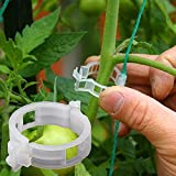 Winmany 100PCS Plant Support Garden Clips Tomato Clips Supports/Connects Plants/Twine/Vines Trellis/Cages Plant Vine Vegetable Fastening Clip Grafting Tools Make Plant Grow Upright and Healthier