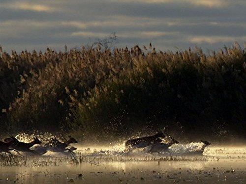 Kalahari - Im Bann der roten Wüste