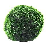 Gobutevphver Decoración de pecera Auténtica Bola de Acuario Paisajismo Happy Green Ambiental Decoración de pecera Plantas de Agua Plantas de Tanque de Agua de Algas Marinas - Verde 3-4Cm
