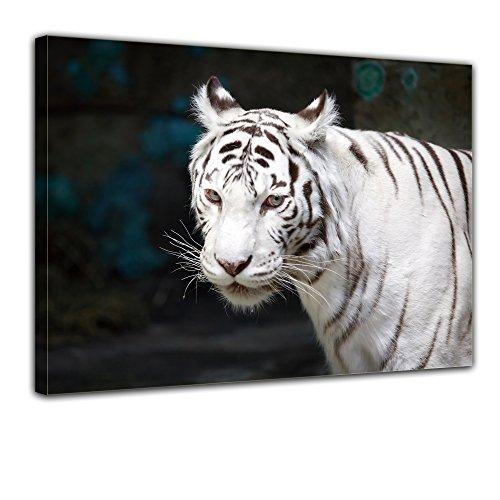 Bilderdepot24 Bild auf Leinwand | Weisser Tiger in 70x50 cm als Wandbild | Wand-deko...