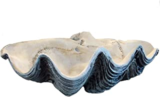 tridacna clam shell