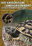 Die Griechische Landschildkröte: Testudo hermanni boettgeri (Art für Art: Terraristik)