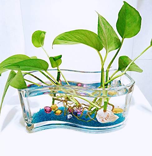 Aquaria Vierkant glazen aquarium Aquarium Home Living Room Vaas Tank Desktop Turtle Tank Aquarium Plant huisdecoratie,30cm
