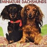 Just Mini Dachshunds 2019 Wall Calendar (Dog Breed Calendar)
