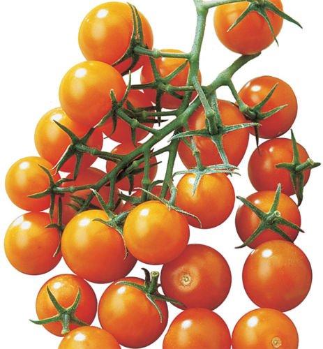 sun sugar tomato - 8