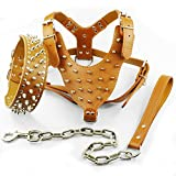 Dogs Kingdom Spiked Studded Leather Dog Pet Collar Harness Leash 3pcs Set Walking Pitbull Boxer Brown M