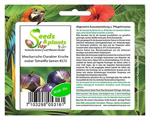 Stk - 25x Mexikanische Charakter Kirsche Tomatillo Pflanzen - Samen #172 - Seeds Plants Shop Samenbank Pfullingen Patrik Ipsa