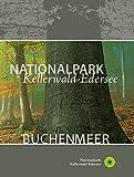 Nationalpark Kellerwald-Edersee Buchenmeer