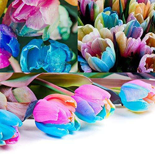 TOYHEART 5 Piezas De Semillas De Flores De Primera Calidad, Semillas De Tulipán, Semillas De Bulbos De Tulipán De Color Arcoíris Perennes Productivas Naturales Para Patio arcoíris