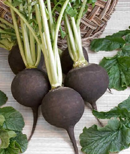 Black Spanish Round Radish - 100 Seeds