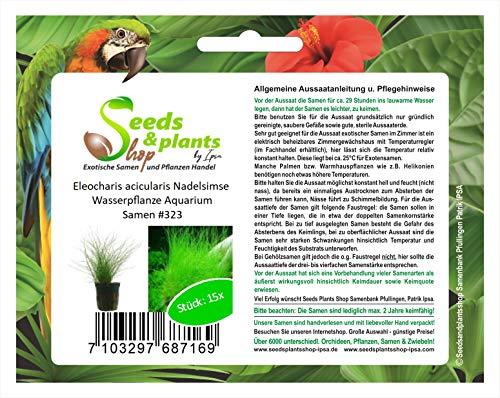 Stk - 15x Eleocharis acicularis Nadelsimse Wasserpflanze Aquarium Samen #323 - Seeds Plants Shop Samenbank Pfullingen Patrik Ipsa