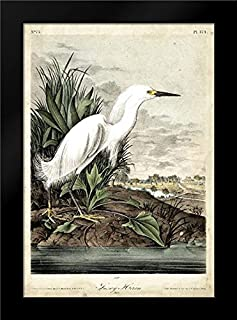 Snowy Heron 28x40 Modern Black Wood Framed Art Print by Audubon, John James