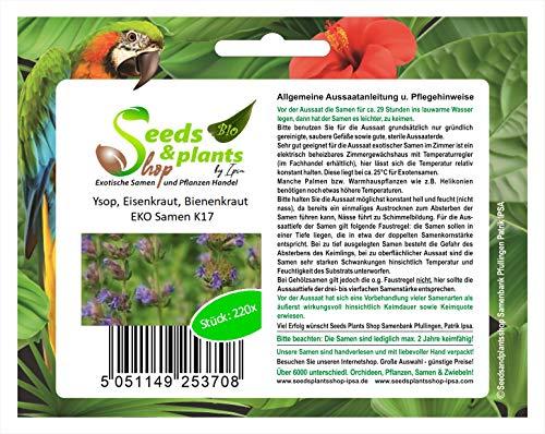 Stk - 220x Ysop, Eisenkraut, Bienenkraut EKO - Ökologische Samen Pflanze K17 - Seeds Plants Shop Samenbank Pfullingen Patrik Ipsa