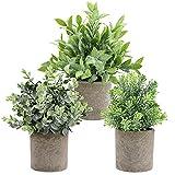 THE BLOOM TIMES Juego de 3 pequeñas Plantas Falsas de plástico rústico de imitación en macetas Verdes, eucalipto, boj, Plantas Artificiales en macetas para el Escritorio de Oficina en casa decoración