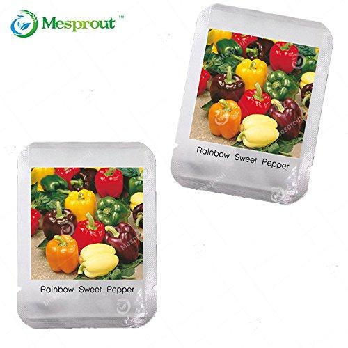 Orange, Jaune, Violet Pepper Graines Balcon légumes en pot multicolore Poivron Seeds 1 Professional Pack (100 pièces)