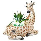 TERESA'S COLLECTIONS Giraffe Gartenfiguren für Außen LED Solarleuchte mit künstliche Sukkulenten Pflanzen 23cm Harz Solarlampe Wetterfest Gartendeko Figuren für Balkon Terrasse MEHRWEG Verpackung