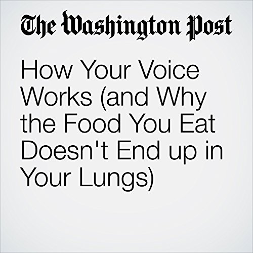How Your Voice Works (and Why the Food You Eat Doesn't End up in Your Lungs) copertina
