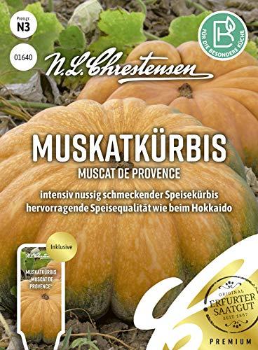 Muskatkürbis Muscat de Provence, intensiv nussig schmeckender Speisekürbis, Samen