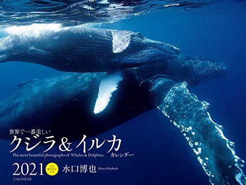 2021年 ワイド判カレンダー 世界で一番美しいクジラ&イルカ カレンダー (誠文堂新光社カレンダー)