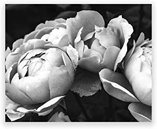 Humble Chic Wall Art Prints - Unframed HD Printed Modern Picture Poster Decorations for Home Decor Living Dining Bedroom Kitchen Bathroom Office Dorm Room - Black & White Peonies BW, 8x10 Horizontal