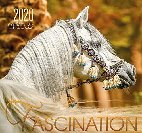 Fascination 2020: Arabische Pferde