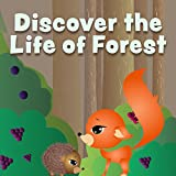 Forest Adventure – Boar
