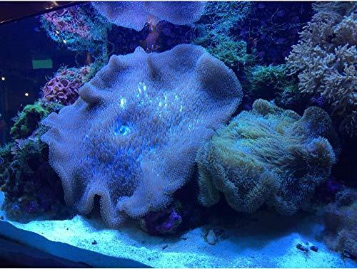 Yqgdss Jigsaw Puzzles Wooden Diy Aquarium Coral Landscape 200 Piece For Adults Children Educational Toys Gift Art Decompression