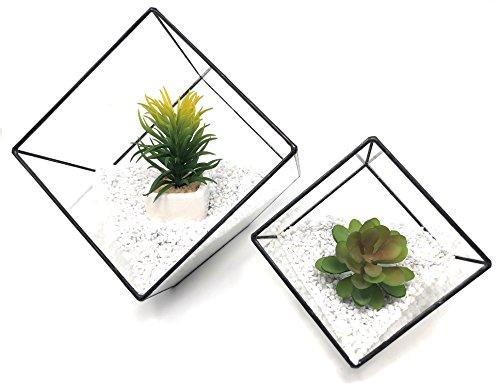 Ultra 2 x Mixte Carré Verre Transparent Terrarium Jardinières Forme Géométrique pour Affichage Mariage Pièce Maîtresse Unique Les Plantes De l'air Fougère Mousse Petites Jardin Intérieur