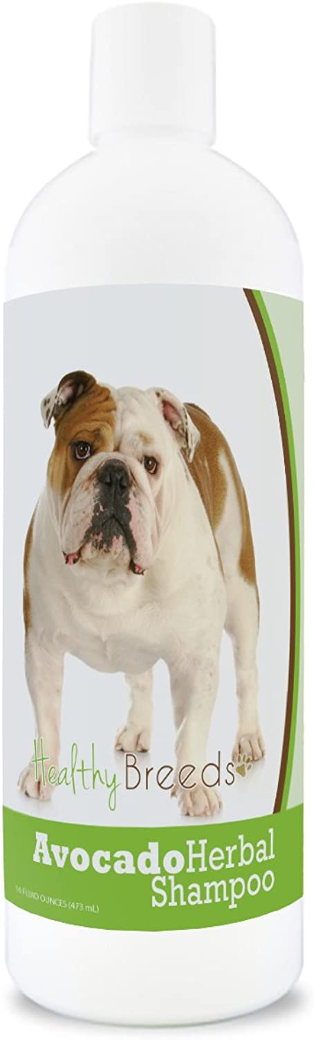 Healthy Breeds Herbal Avocado Dog Shampoo for Dry Itchy Skin for Bulldog  Over 200 Breeds  for Dogs with Allergies or Sensitive Skin  16 oz