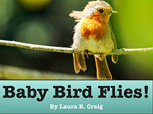 Baby Bird Flies!: A children's picture book for toddlers, kids and beginning readers who like animals and traveling! (The Baby Bird Series) (English Edition)
