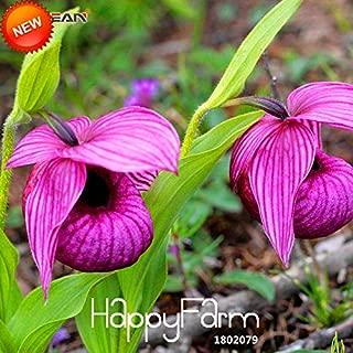 Pot Flower Big Mini Orchids Big Sale!50 Pcs/Pack Purple Large Flower Cypripedium Seed Balcony Potted Bonsai Slipper Orchid Flower Seed,#SJI54L