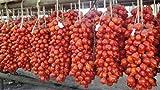 piantine di pomodoro del piennolo del vesuvio, 20 piantine