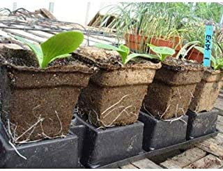"""Cow Pots - Environmentally Friendly Made from Odor-Free, 100% Composted Cow Manure (20, 3"""" Square x 2.5"""" Tall)"""