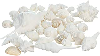 White Decorative Sea Shell Mix | 2 Pound of Shell for Decoration | Shells for Craft |..