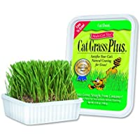 Cat-About by MiracleCorp Gimborn Single Cat Grass Plus, 60-Gram