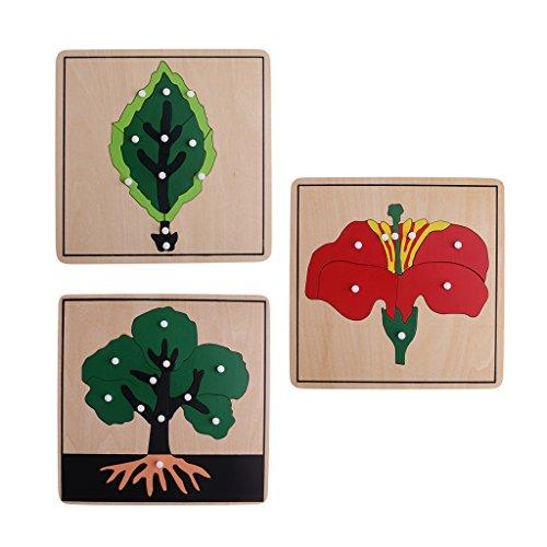 LOVIVER 1 Pack Montessori Matériel de Botanique Puzzles - Casse-tête Forme de Plante Jeu d'apprentissage