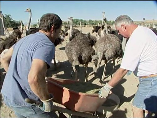 Ostrich Farmer