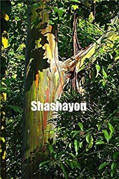 100 Stück seltene Regenbogen-Eukalyptus Bonsai-Baum Zierpflanzen Riesen Auffälliges Tropischer Baum für Garten Pflanzen der Außen Bonsai Geschenk: 14