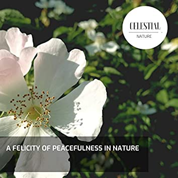 A Felicity of Peacefulness in Nature