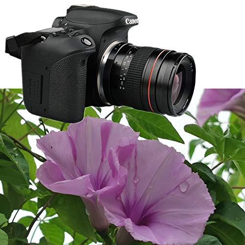Lente gran angular F2.0 de 35 mm y compatible con cámaras Nikon D5500 D3300 D3200 D5300 D3400 D7200 D750 D3500 D7500 D500 D600 D700 D800